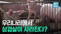 [엠빅뉴스] '북한 멧돼지'가 치사율 100% 아프리카돼지열병 옮겼다? 팩트체크 해봤더니..