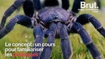 """""""Friendly Spider"""", le programme pour en finir avec la peur des araignées"""