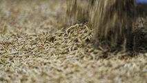 """Ÿnsect, la """"fermilière"""" qui transforme les insectes en protéines"""