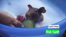 حيوانات شهيرة: الأميرة خوخة