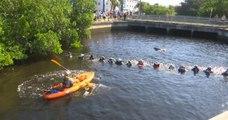Des sauveteurs forment une chaîne humaine pour sauver 4 dauphins coincés dans un canal