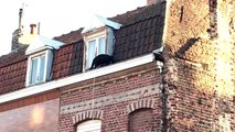 Une panthère noire sur les toits d'Armentières