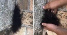 Il ramasse « une boule de poils » et se retrouve avec une centaine d'araignées sur les mains