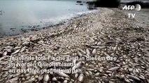Massenhaftes Fischsterben in griechischem See