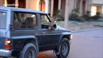 Voilà ce qu'on peut croiser au Qatar : un singe accroché au rétro d'un Nissan Patrol