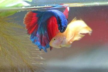 Die häufigsten Krankheiten bei Aquarienfischen
