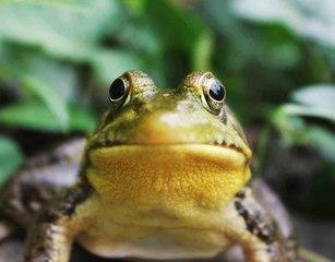 Welche Pflege benötigt mein Frosch?