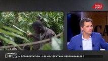 Cacao : la traçabilité est une arnaque selon François Ruf, économiste #UMED