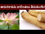 Amazing Benefits of Lotus Root