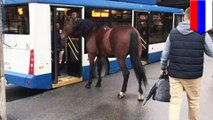 Lonely Russian horse tries to ride on the city bus