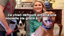 Ce pauvre chien entame une nouvelle vie grâce à la chirurgie !