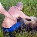 Meilleurs sauvetages d'animaux : compilation !
