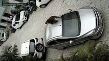 Un singe saute sur une voiture et cabosse le toit... Pas de chance