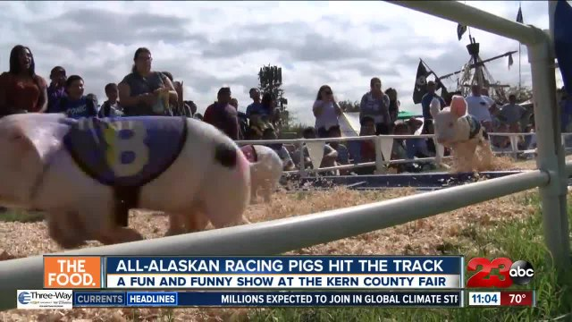 All-Alaskan Racing Pigs hit the track at the Kern County Fair