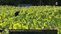 Champagne : des successions hors de prix contraignent les vignerons à vendre leurs terres
