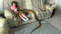 Un serpent python de compagnie de 6m de long joue avec une fillette !