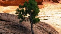How Do Trees Grow From Within Rocks? National Park Service Explains