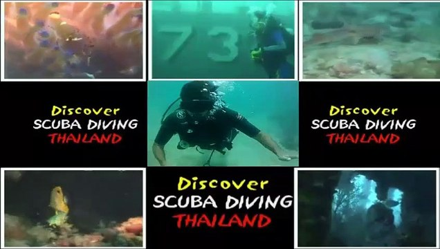 Koh Tao, Coral Dive, Triggerfish, Nemo, Angels, Anemone, groupper and Thailand Diving Pattaya school