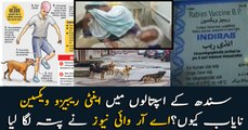 Why Anti Rabies vaccine is short in Sindh, ARY news reveals the truth