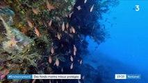 Environnement : des fonds marins mieux protégés en Corse