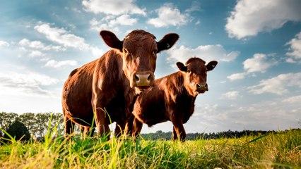 Rural Funds responds to short seller report