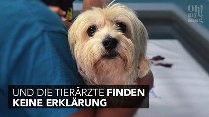 In Norwegen sterben aus unerklärlichem Grund Dutzende Hunde