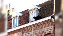 Cuando una pantera pasa por delante de tu ventana
