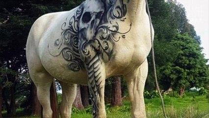 Dieses tätowierte Pferd schockiert alle. Doch in Wahrheit handelt es sich um etwas anderes
