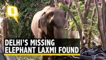 Delhi's Missing Elephant Lakshmi Found After 2 Months, Mahout Held