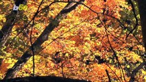 Fall Is Here! 4 Mind-Blowing Facts You Never Knew!