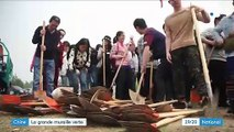 Chine : la reforestation pour mission