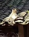Un vrai pacha ! Ce chat prend un bon bain de soleil. Mais ce n'est pas tout voyez sa position