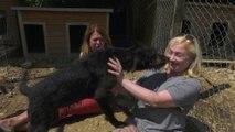 Brits Rescue Romanian Dogs - Episode 4