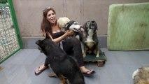 Brits Rescue Romanian Dogs - Episode 3