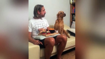 Un chien joue les désintéressés !