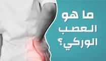 ما هو العصب الوركي؟