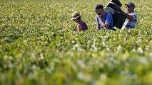Trafic d'êtres humains : le Beaujolais secoué par une vaste enquête