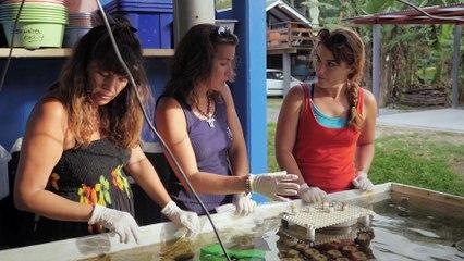 Polynésie, un écosystème sous haute surveillance #2   Sur les routes de la science