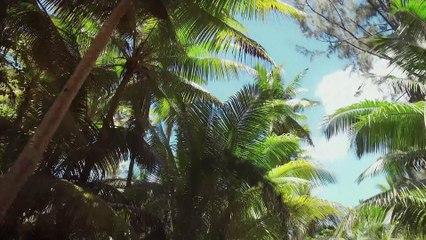 Polynésie, un écosystème sous haute surveillance #3   Sur les routes de la science