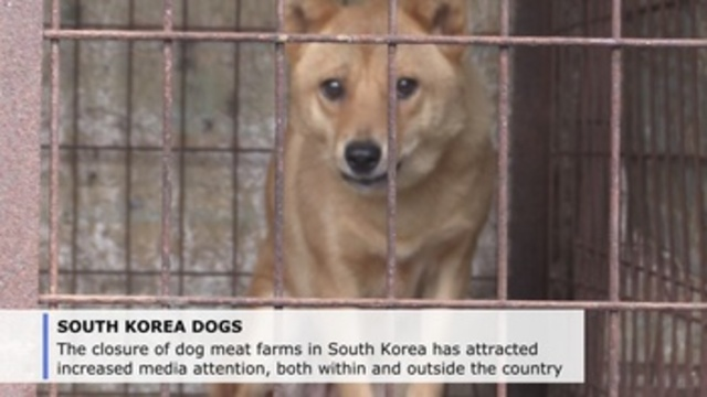 Closure of dog-meat farms in South Korea: A happy ending that makes news