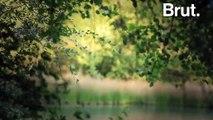 En immersion au cœur de la forêt de Rambouillet pour écouter le célèbre brame du cerf