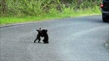 Quand tu croises deux adorables oursons sur la route