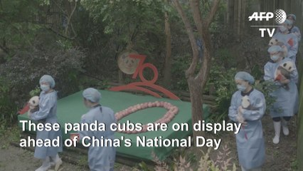 Panda cubs join China's anniversary celebrations