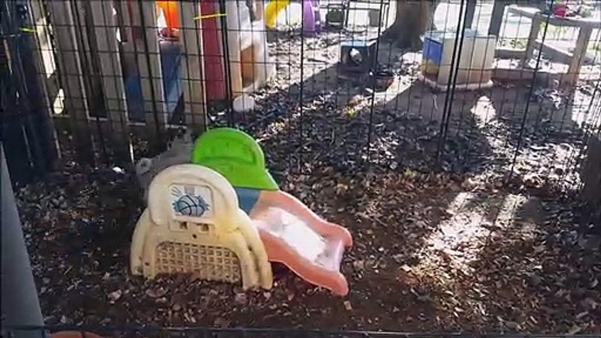 Shih Tzu vs Cairn Terrier - Pet Guide | Funny Pet Videos