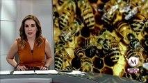 Reportan muerte masiva de abejas en Tizimín, Yucatán