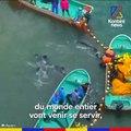 Le dauphin Honey, seul dans son bassin
