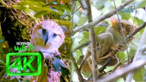 Born to be Wild: Documenting Philippine eagle and Philippine tarsier in 4K | Full episode