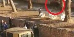 Este toro se fuga de la plaza en Valencia, hiere a una mujer y la Policía lo mata a disparos en la calle