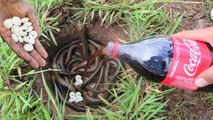 Amazing Technology Coca Cola and Mentos Catch a lot Eels In Underground Hole