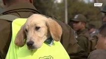 كلاب تسرق الأضواء خلال عرض عسكري في تشيلي !!